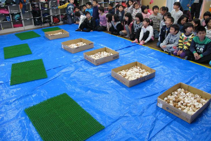 教室のなかにブルーシートが敷かれ、卵の殻と人工芝のマットが用意された